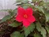 rosa_blomst_steinsvikhagen